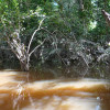 Park Amacayacu po kolumbijskiej stronie Amazonii